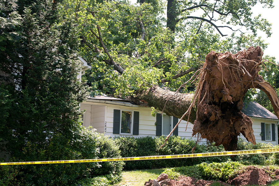 Oregon Tree Removal Hazard Awareness Westcoast Tree Care