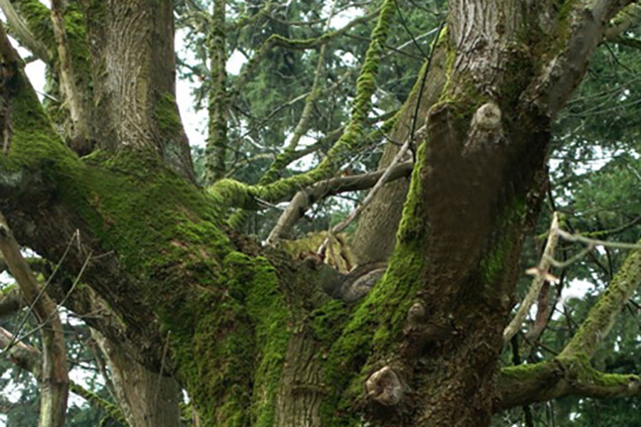 Tree Care & Moss—Is It Beautiful or Harmful?
