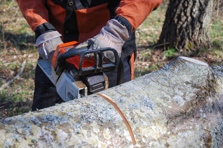 Tree Care for Insect Pests in Your Deciduous Trees