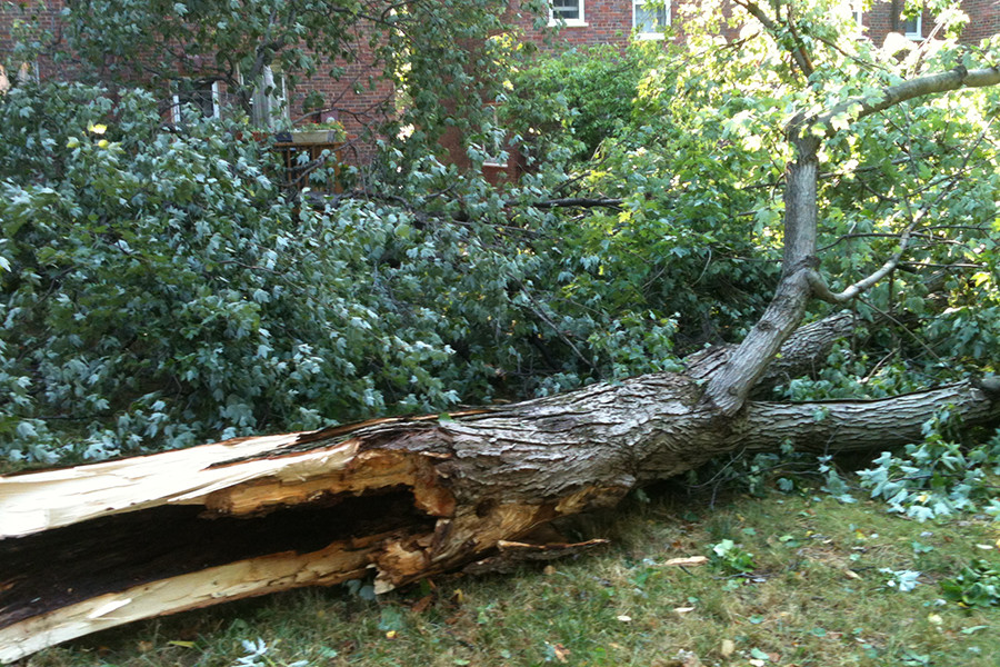 What is Preventative Tree Care?