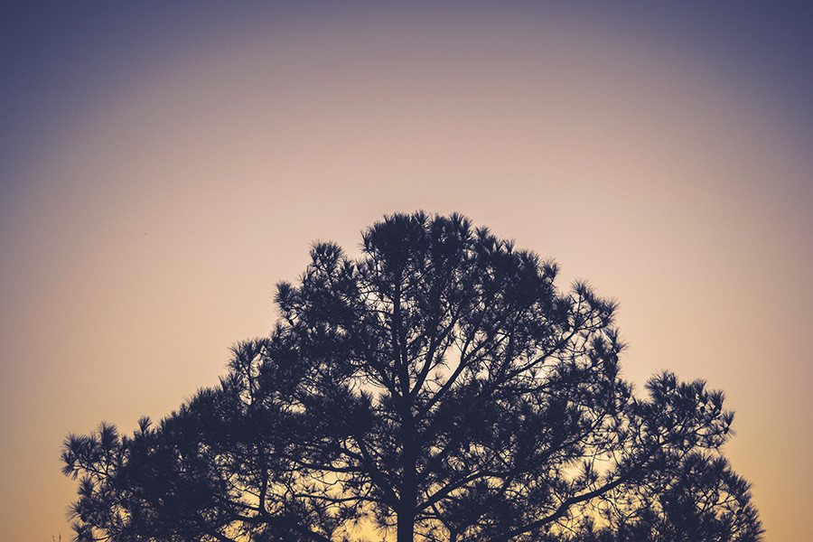 Tree Maintenance: FAQ's about our Services in the Tri-Cities (Washington) Area