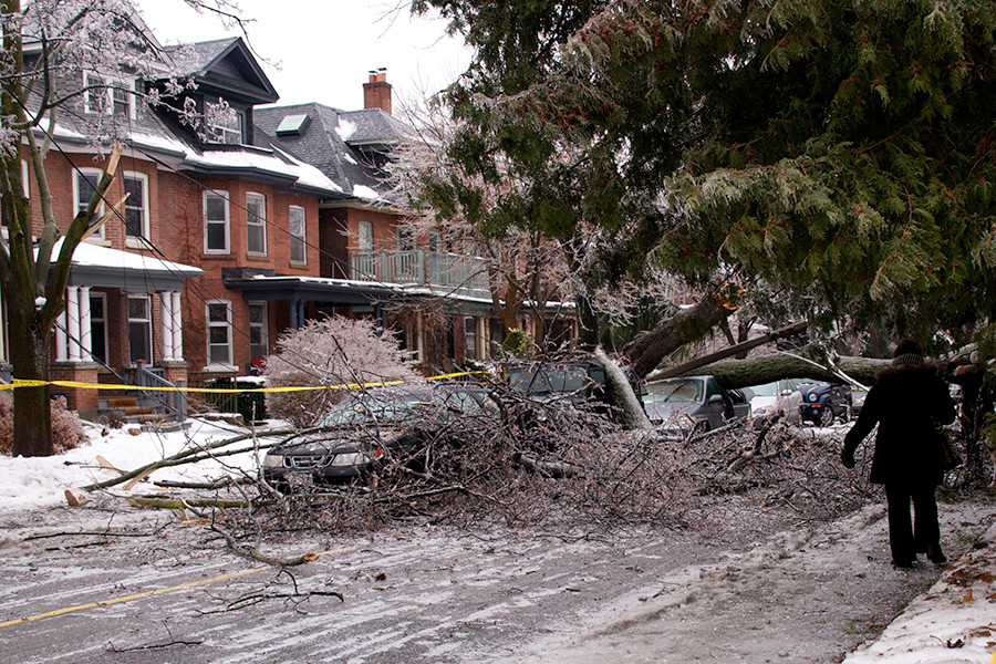 Preventative Tree Care & Storm Prevention in Walla Walla, Washington