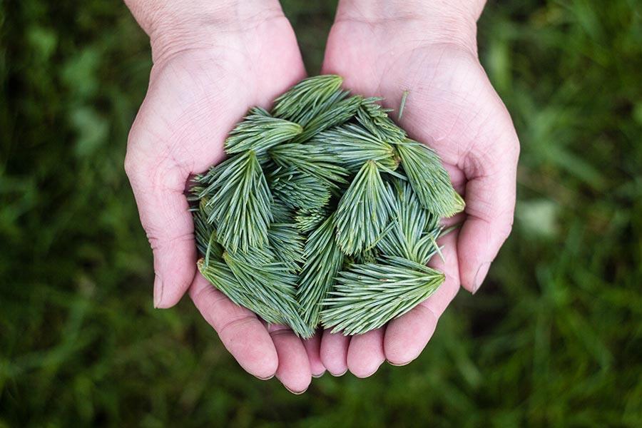 arborist tree planting recommendations