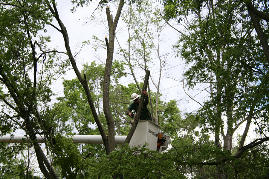 Tree Pruning Do's and Don'ts in Olympia, Washington