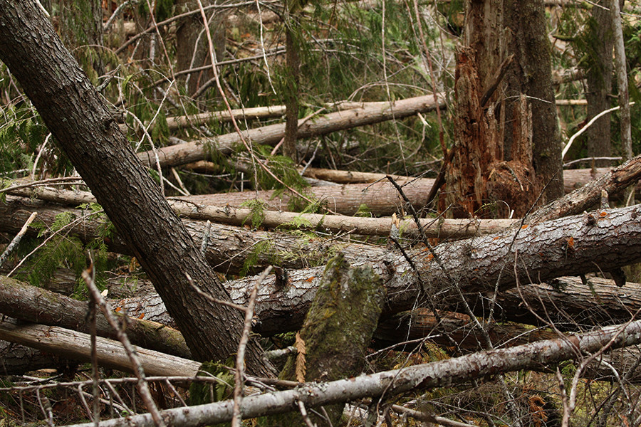 The Importance of Deadwood Removal in La Conner, Washington