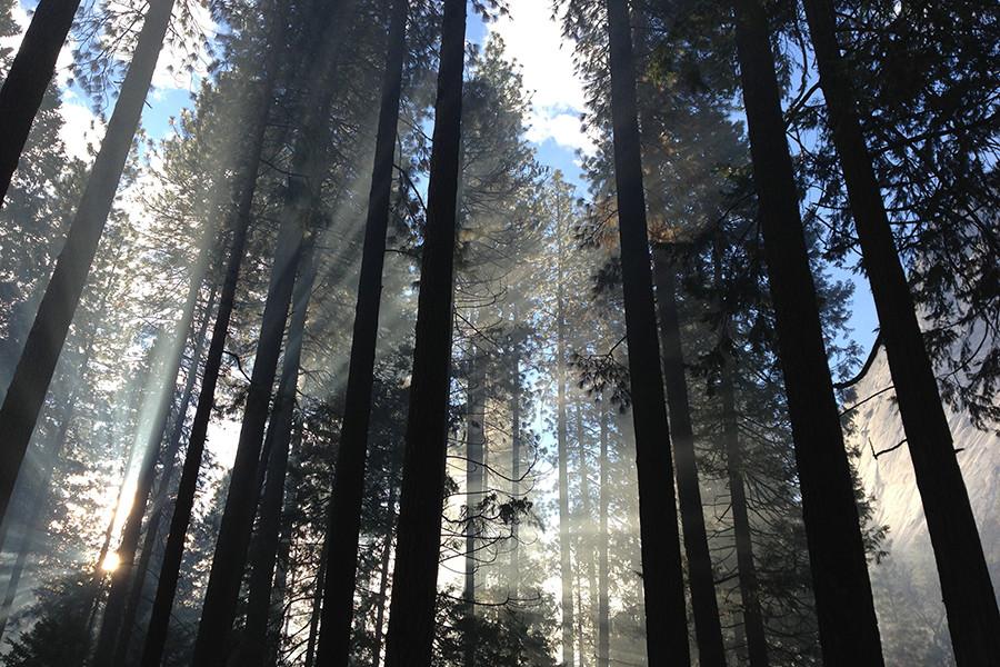 Preventative Tree Care in Coupeville, Washington