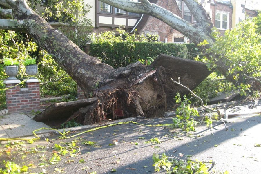 How to Handle Emergency Tree Care Situation in Walla Walla, WA.