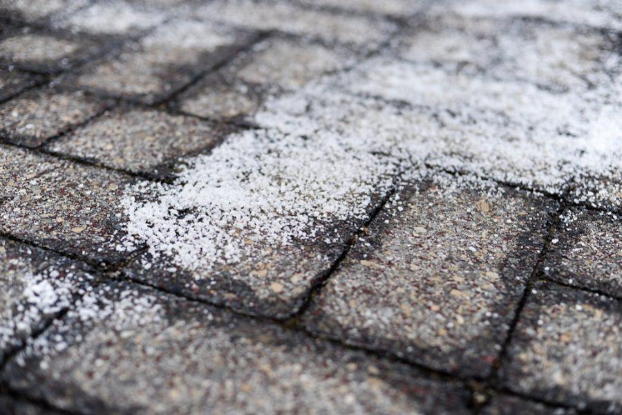 Winter Tree Care Tips for Preventing Salt Damage