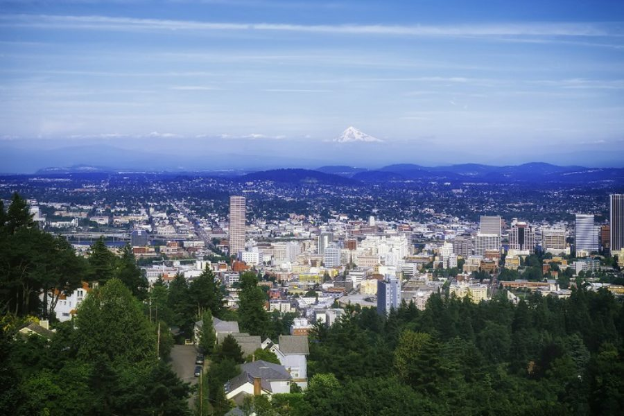 Tree Care & View Enhancement In Portland, Oregon