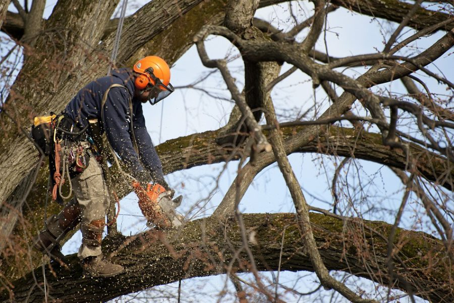 Tree Care Alternatives to Topping Trees in Beaverton, Oregon