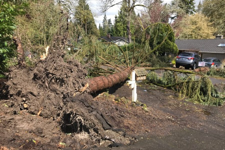 Tree Care Tips for Reducing Wind Damage in Lake Oswego, OR