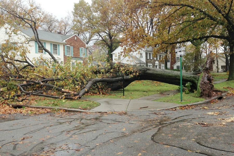 Tree Care Tips: Dealing with Spring Storm Damage
