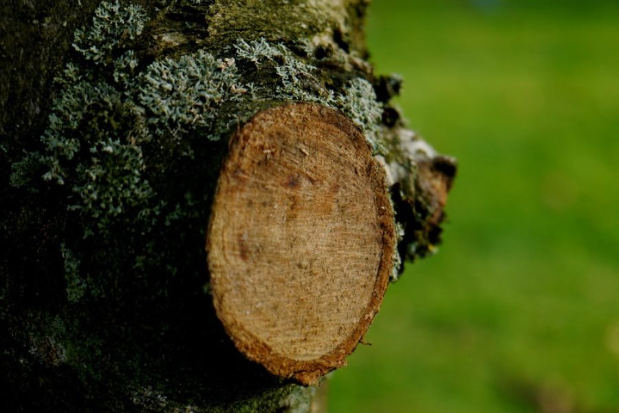 Common Tree Care & Pruning Mistakes Made By Homeowners