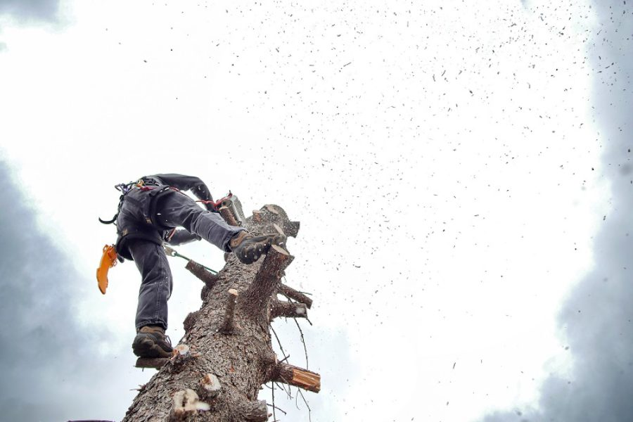 Why It's Important to Hire an ISA Certified Arborist Corvallis, OR