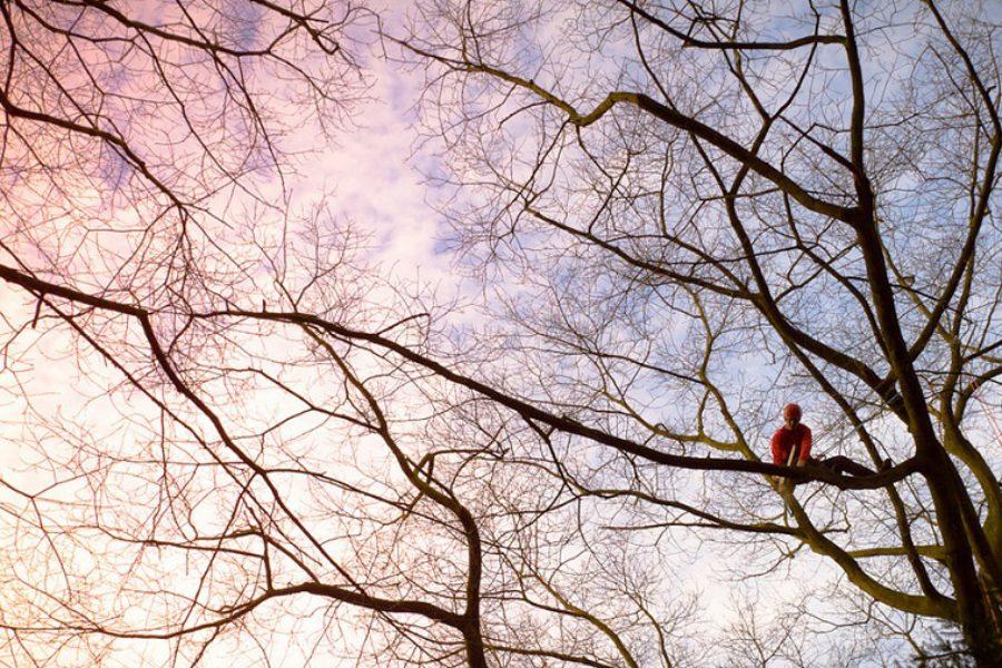 The Dangers of DIY Tree Care in Salem, Oregon