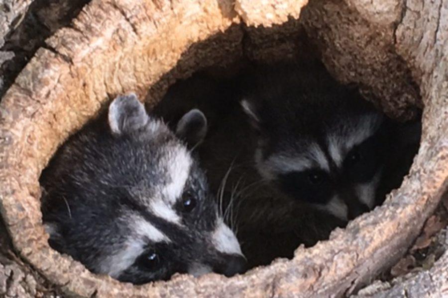 Westcoast Tree Care: Promoting Healthy Trees & Saving Wildlife in Corvallis, OR