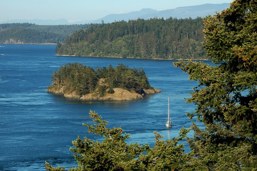 The Importance of Preventative Tree Care in Whidbey Island