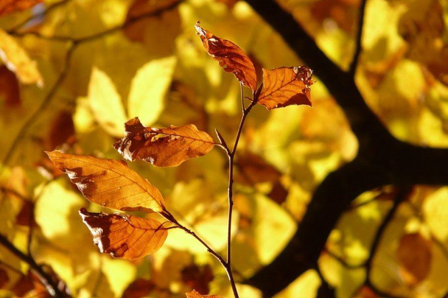 Preventative Tree Care For Identifying Diseased Trees