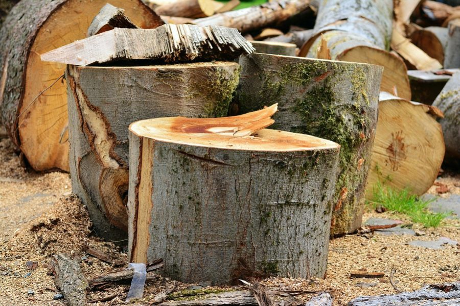 Reasons to Consider a Tree Care Removal Service