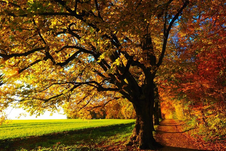 Tree Care Tips for Keeping Your Trees Healthy This Fall and Winter
