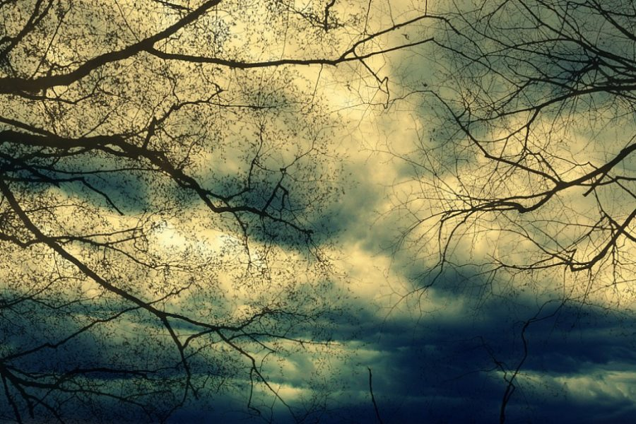 Preventative Tree Care & Fall Storm Damage in Spokane, Idaho