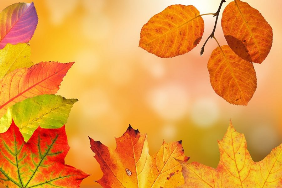Important Tree Care Services to Consider this Fall In Spokane, Idaho