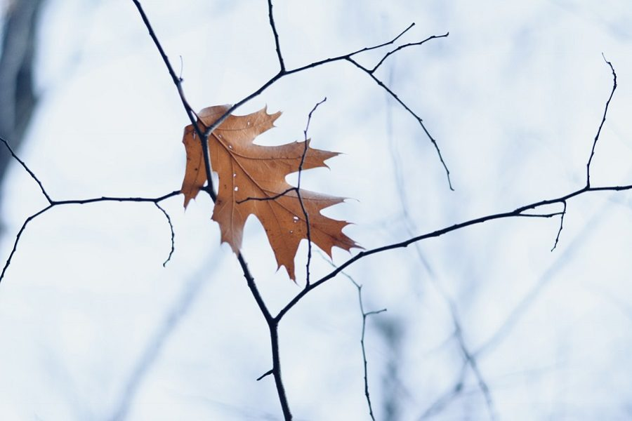 The Benefits of Winter Tree Pruning in Spokane, WA