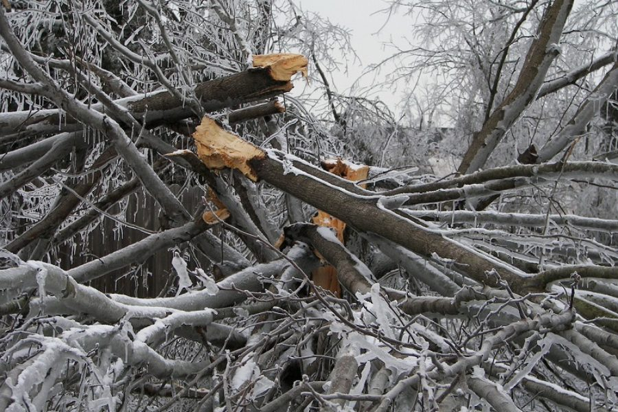Certified Arborist: Treating Damaged Trees in Spokane, WA
