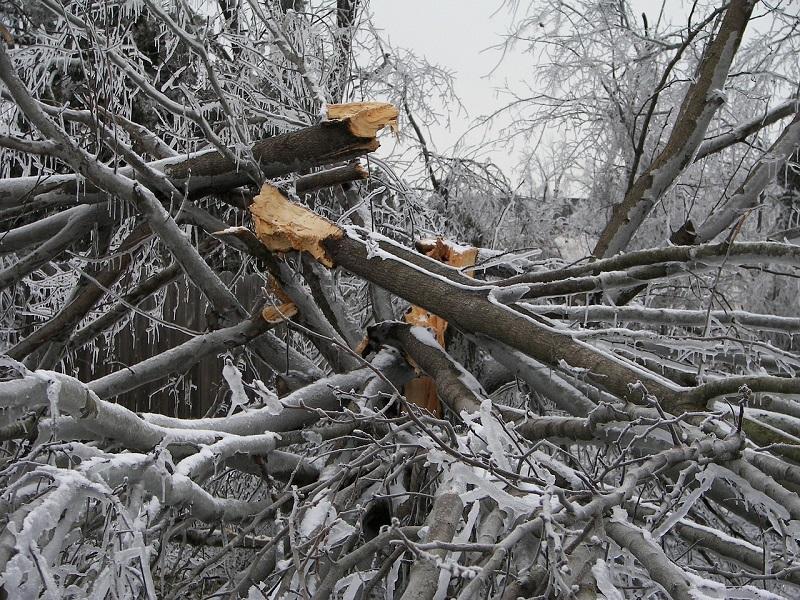 certified arborist, tree care, preventative tree care