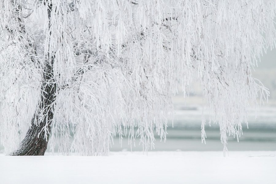 Coeur d'Alene Idaho Tree Care: Winter Prevention Tips