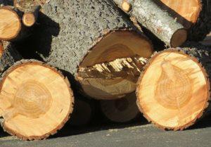 Tree removal, certified arborist, tree care, preventative tree care