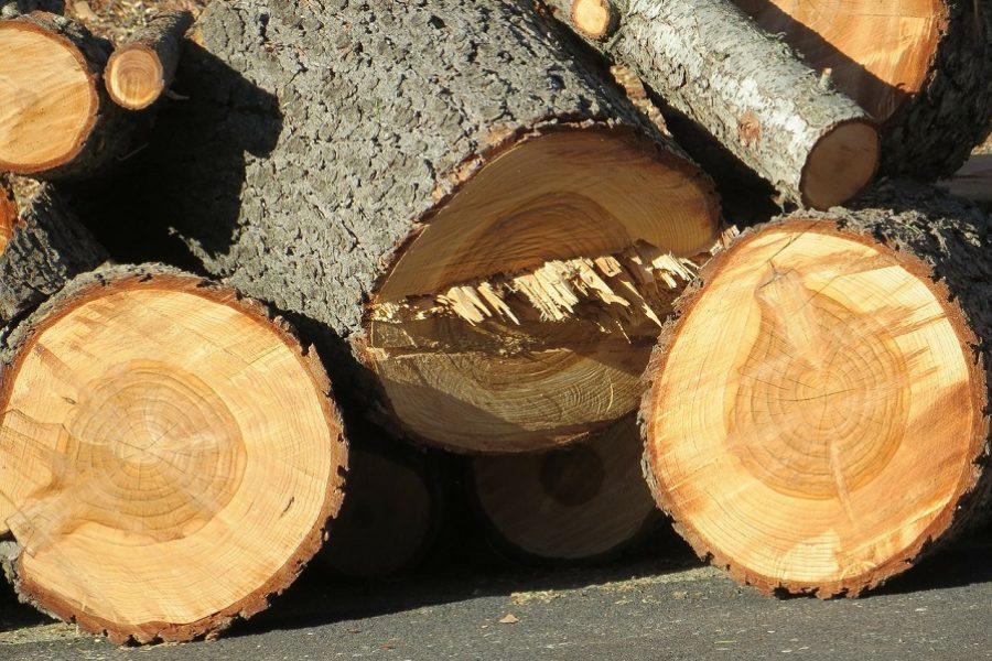 The Dangers of DIY Tree Removal in Bellevue, Washington