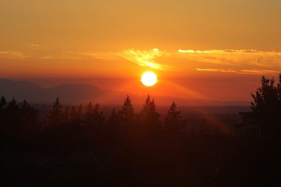 Why Choose Westcoast Tree Care in Issaquah, Washington?