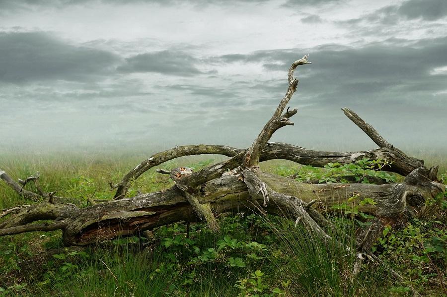 Preventative Tree Care, Tree Care, Certified Arborist, Westcoast Tree Care