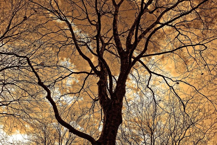 Preventative Tree Care, Tree Care, Windsail Reduction, Certified Arborist
