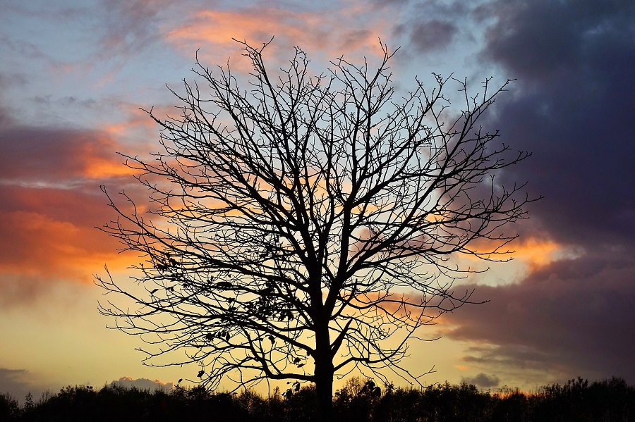 Tree removal, Tree Care Removal, Tree Care, Preventative Tree Care, Certified Arborist, Westcoast Tree Care