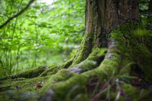 Tree Care, Olympia Washington, certified arborist