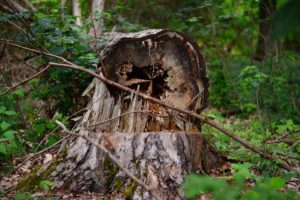 Vancouver Tree Care, Tree Care, Preventative Tree Care, Vancouver Certified Arborist