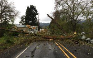 Beaverton Tree Care
