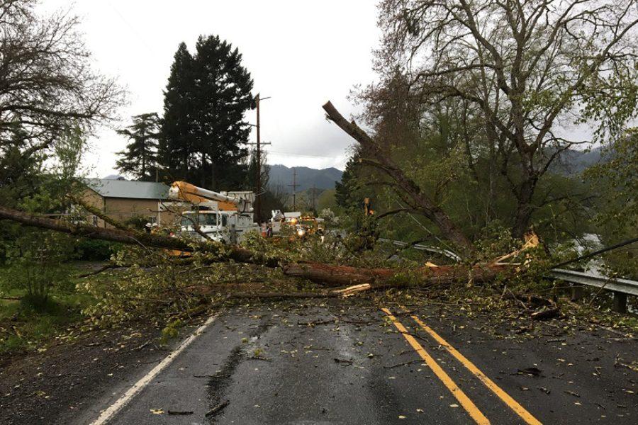 Beaverton Tree Care: Trees & Power Lines