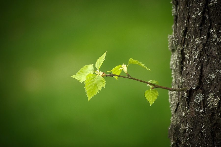 Spring Tree Care Tips in Beaverton, Oregon
