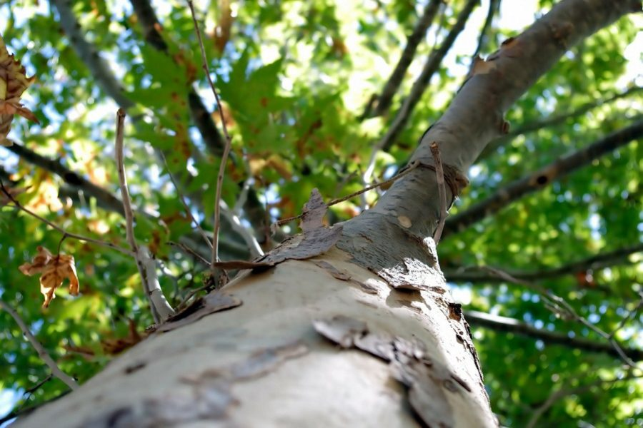 Common Reasons for A Portland Tree Removal Service