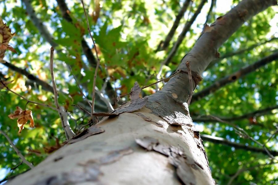 Portland Tree Removal