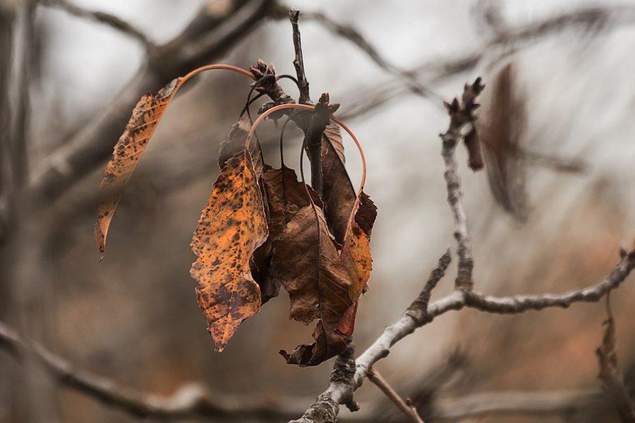 Beaverton Tree Care 101: The Hidden Dangers of Dead Trees