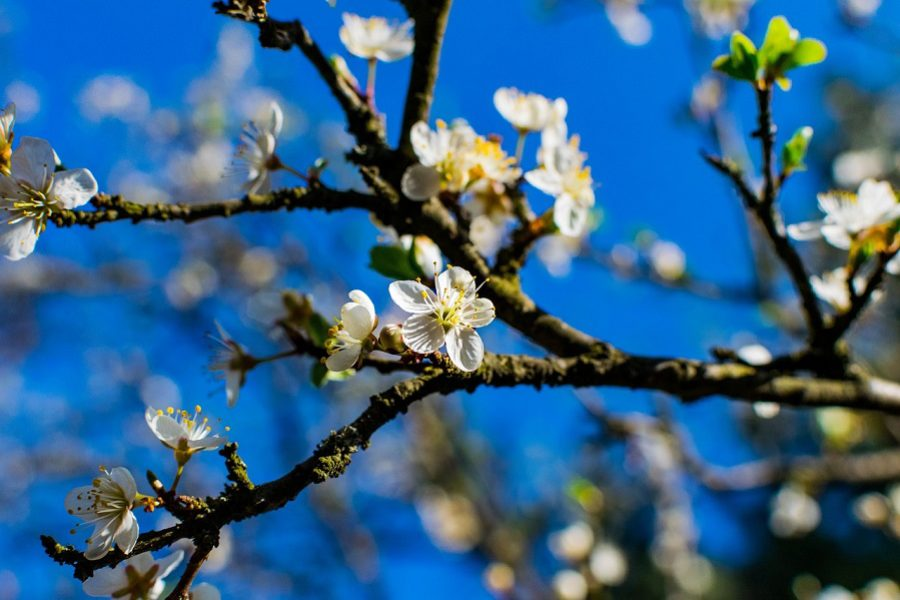 Spring Tree Care In Lake Oswego, Oregon