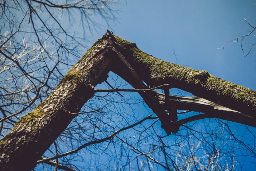 Portland Tree Care: What to Do When A Tree Falls on Your Property