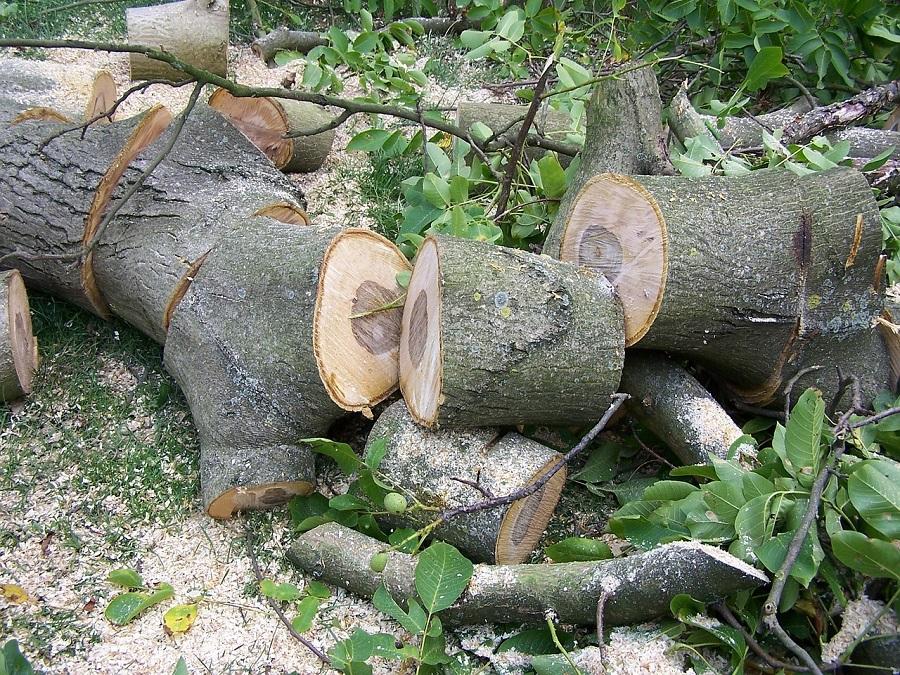 Salem Oregon Tree Care
