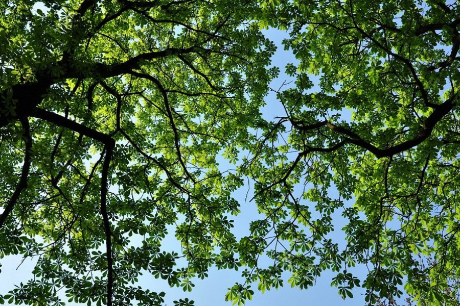 Structural Pruning & Preventative Tree Care In Salem, OR