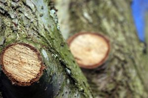 Preventative Tree Care