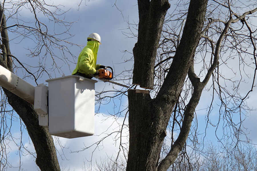 Why Having The Right Tree Care Removal Equipment Is Important